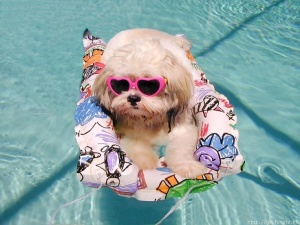 dog-having-fun-in-pool